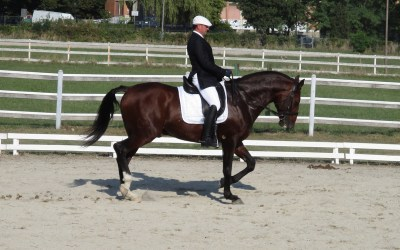 25 Settembre: i cavalli spagnoli all'ippodromo