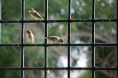 sparrow-806176_960_720