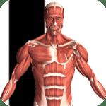 Visual Anatomy 2 v 3.1 APK
