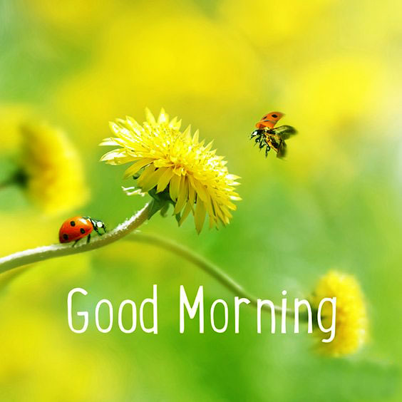 good morning images photos download