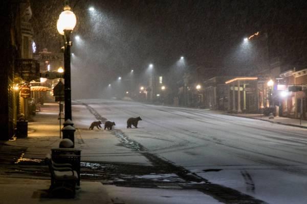 Une ourse suivie de ses deux oursons traverse la rue principale de Ouray sous une inattendue chute de neige printanière