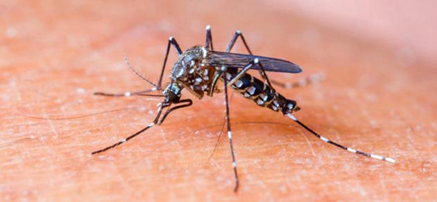 Itabuna registra mais de 23 mil vítimas do Aedes