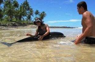 Itacaré: Golfinho é resgatado após 2 encalhes