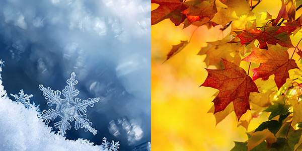 snowflakes and leaves