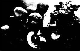 Fruit Basket in black & white