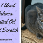 How I Used Melaleuca Essential Oil for Cat Scratch