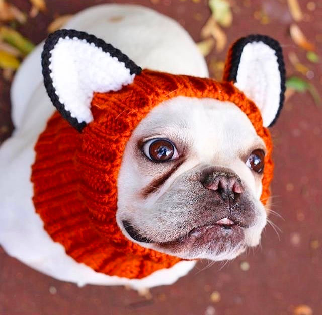 Fox Dog Hood Turns Your Dog Into a Fox