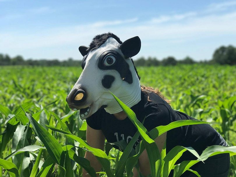 Halloween Costume Cow Head Mask by CreepyParty