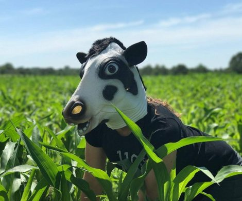 Halloween Costume Cow Head Mask