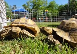 Tortoises 2