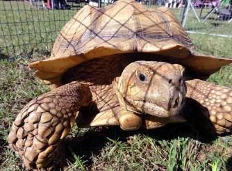 tortoises-002
