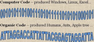 The Computer Code and Organic Code (DNA) are quite similar