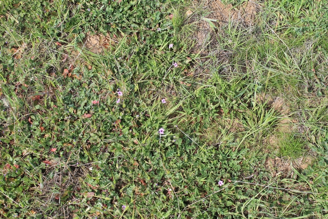 Pictures of smaller plots record vegetation and soil surface detail changes.