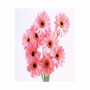 15 Pink Gerberas Bunch