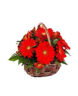 red Gerberas Basket Arrangement