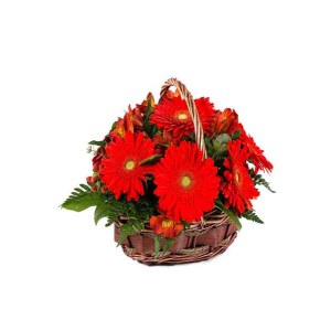 red Gerberas Basket Arrangement