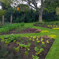 Heronswood Parterre