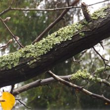 Trees in Winer with Moss