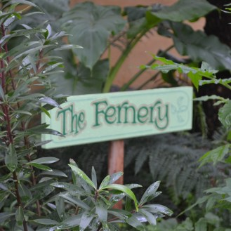 The Fernery is loving the moist climate