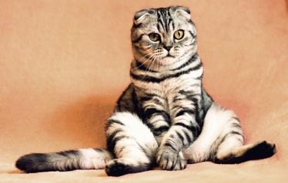 Kapan Tepatnya Memberi Obat Cacing Kucing?