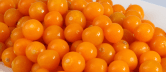 la uchuva especie frutícola andina