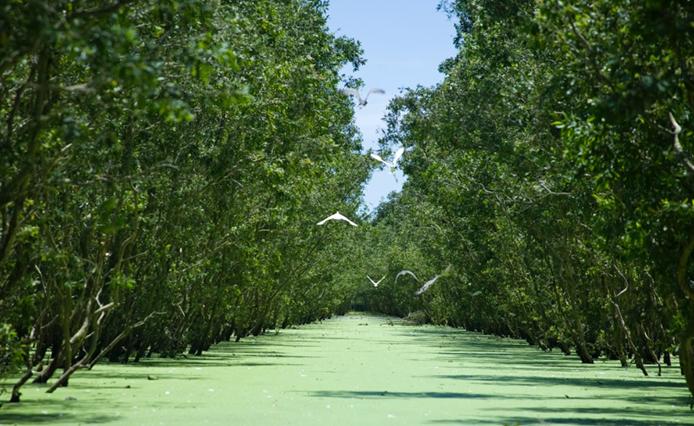 Vietnam: Mangroves Planting to Mitigate Sea Dyke Erosion