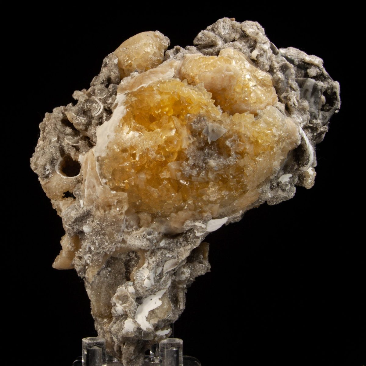 Calcite in Busycon