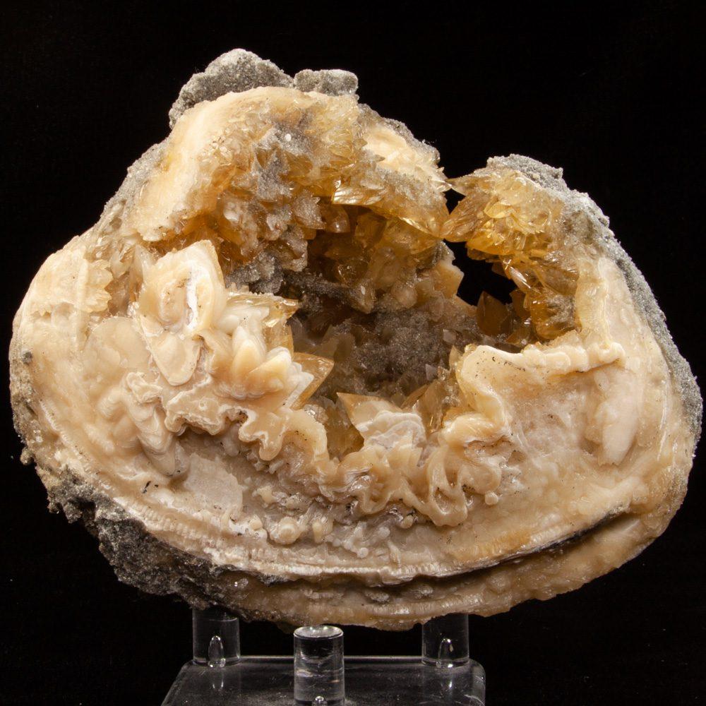 Calcite in Mercenaria Shell