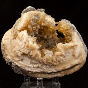 Calcite in Mercenaria Shell