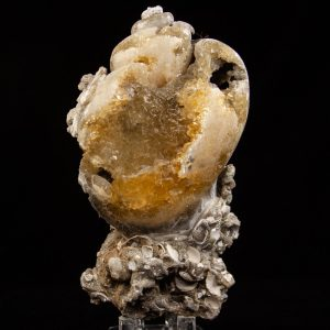Calcite in Busycon Shell