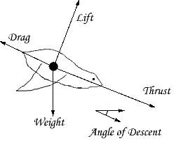 Basic Flight Physics