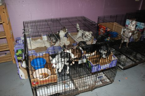 Scotch Plains pet rescue 3