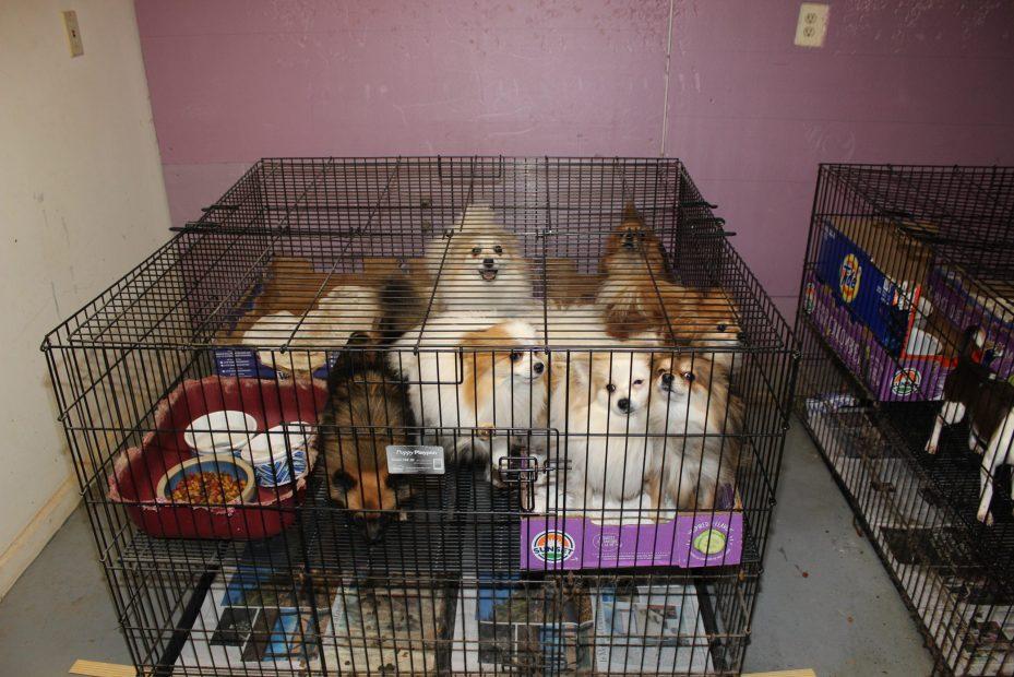 Scotch Plains pet rescue 4