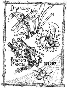 website backyard bugs coloring page