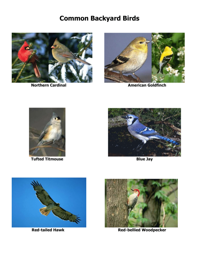 website-CommonBirds-1
