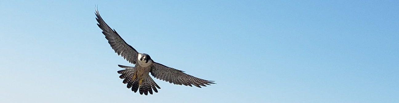falcon airborne 5-520
