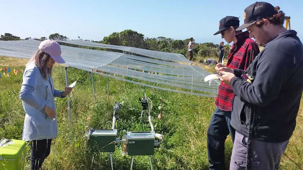 Three undergraduates use instruments to measure photosynthesis rates at an International Drought Experiment plot at Younger Lagoon Reserve