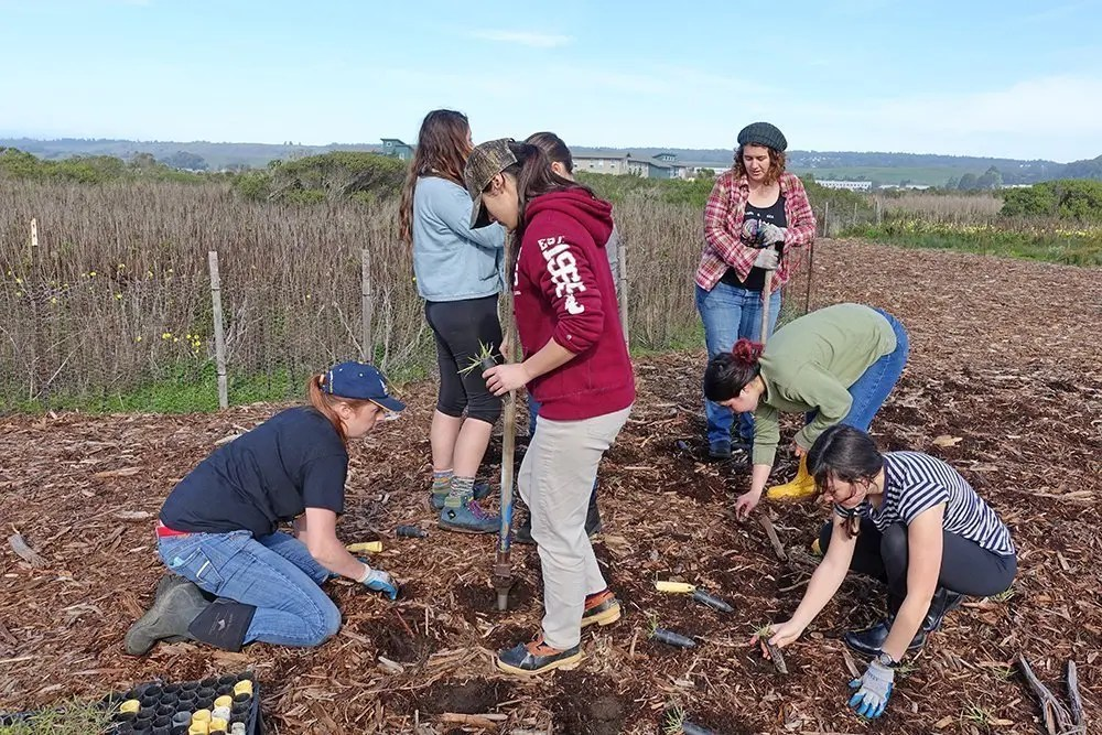 group of UCSC students restoring coastal prairie at Younger Lagoon