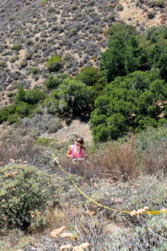 tape line draped across shrubs on a hill; student with clipboard stands in waist-high scrub