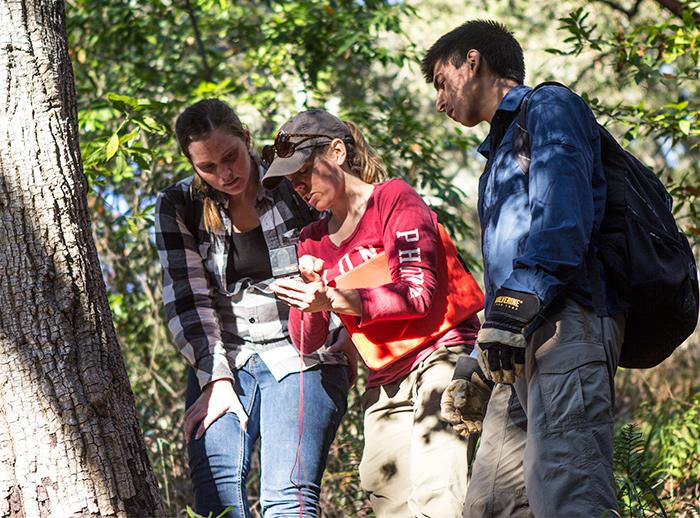 students surveying plots at Landels-Hill Big Creek for sudden oak death