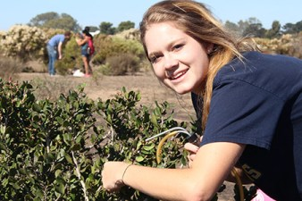 "Student samples insects from a shrub at Scripps Coastal Reserve. using an aspirating ""pooter."""