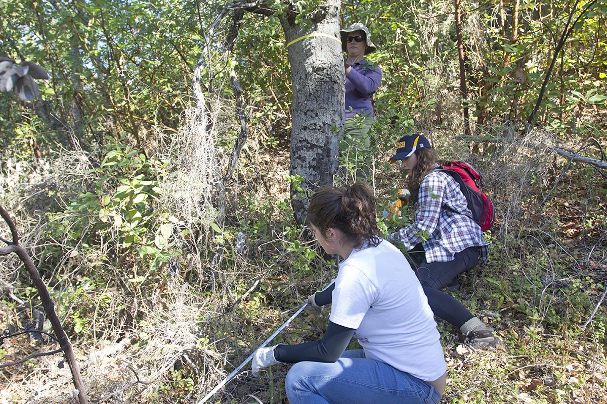 Students practice field techniques at Landels-Hill Big Creek Reserve. Image credit: Lobsang Wangdu