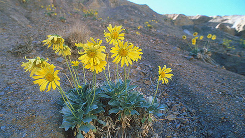 native plants outpaced by climate