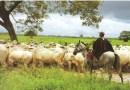 ARIGlobal: La UCV y la salvaguarda de los cantosde trabajo del llano colombo-venezolano