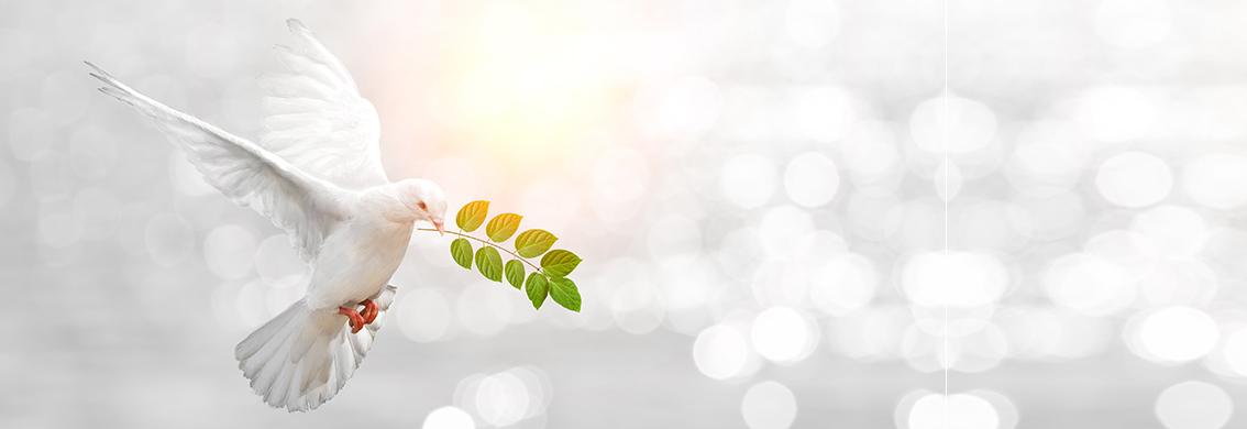 Rola Ducha Świętego w życiu wierzącego i Kościoła
