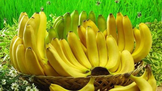 macam macam pisang