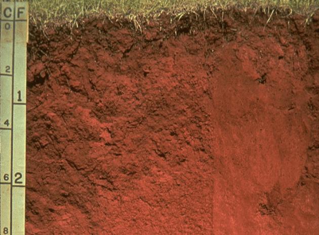 Jenis-jenis tanah