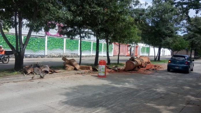 denuncia tala de árboles