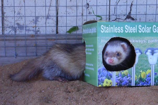 Коробка для хорька. Фото