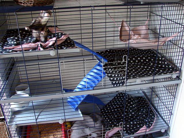 Гамак в клетке. Фото